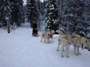 Dog Sledding in Bukovel