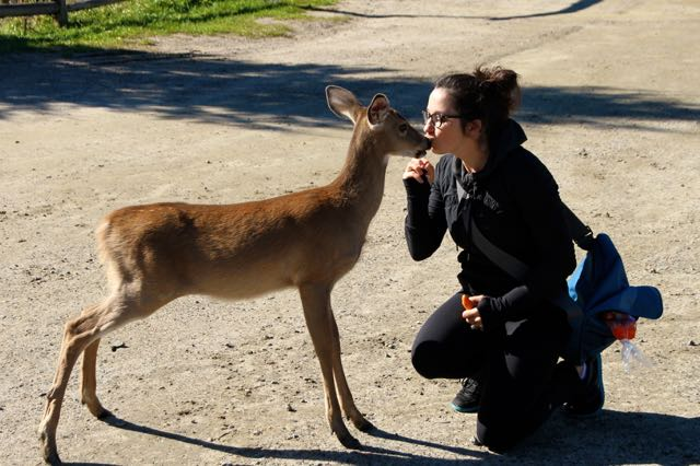 Jenn kissing a deer at parc omega quebec