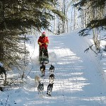 Dogsledding in Saskatchewan