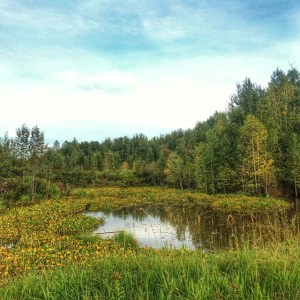 Beautiful marsh land at Elk Island National Park