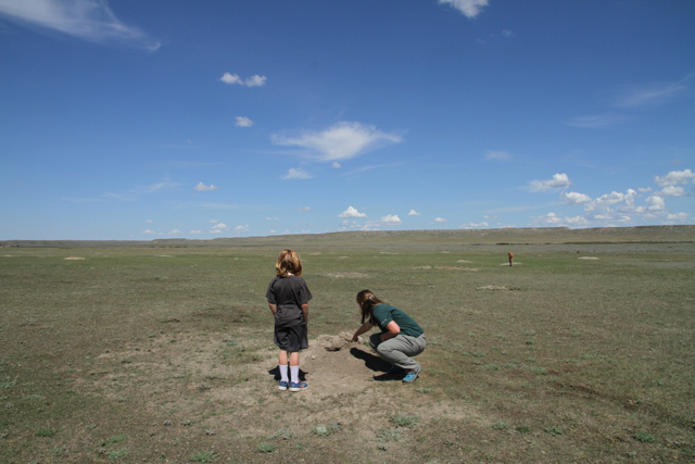 black tailed prairie dog's burrow at Grasslands