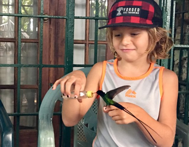 Zevin with a swallow tailed hummingbird in Jamaica - image by Jenn Smith Nelson