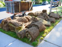 Collected Sod