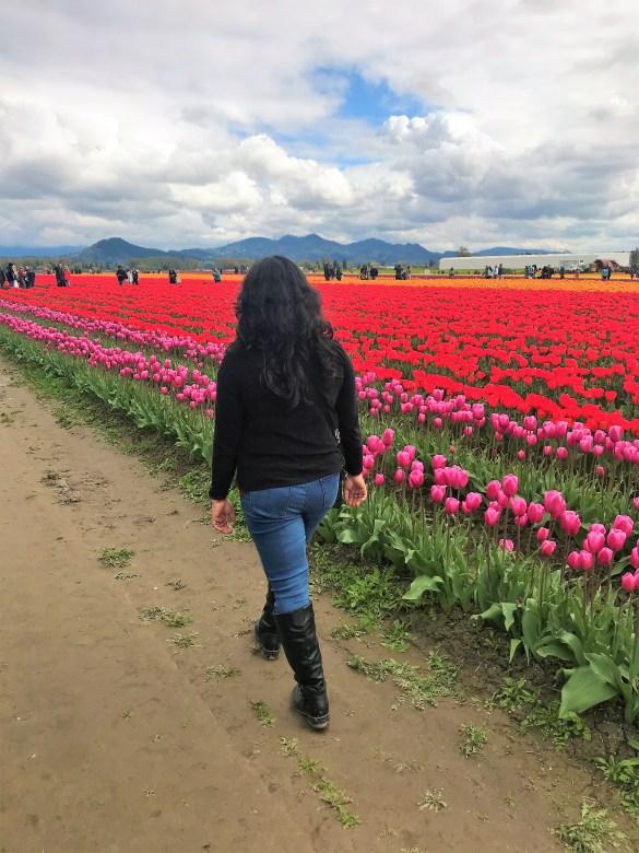 Wandering in Tulip Fields. Skagit Valley Tulip Festival.
