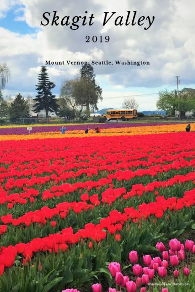 Skagit Valley Tulip Festival 2019, Mount Vernon near Seattle, Washington. Tulips are bloomed in Skagit Valley.