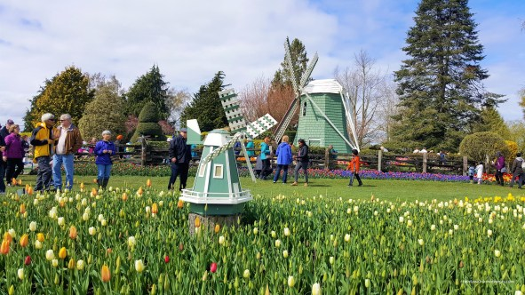 Big and small Windmill at Display Garden