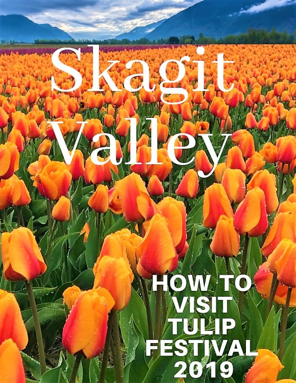 Skagit Valley Tulip Field, Have you visit Skagit Valley Tulip Festival, near Seattle.  Skagit Tulip Festival 2019. Park your Vehicles.