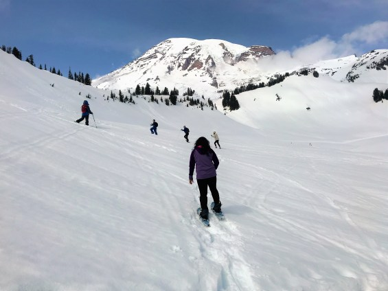 View of Mount Rainier, Skiers and snow shoers at Panorama point trail.