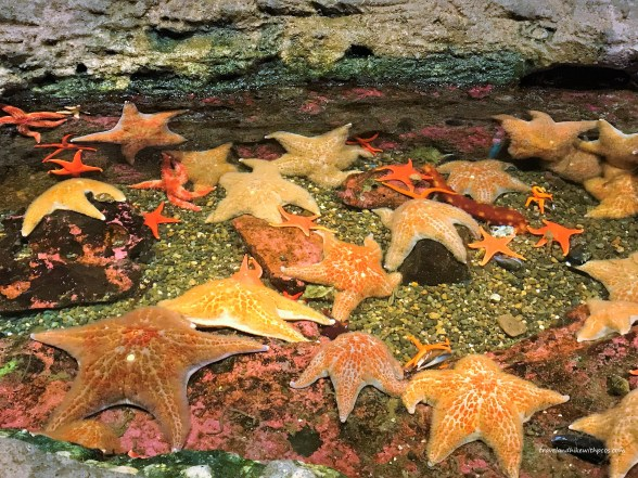 Star Fishes at Tide Pool in Seattle Aquarium Must Visit  Attractions in Seattle Washington  Places to visit in Seattle