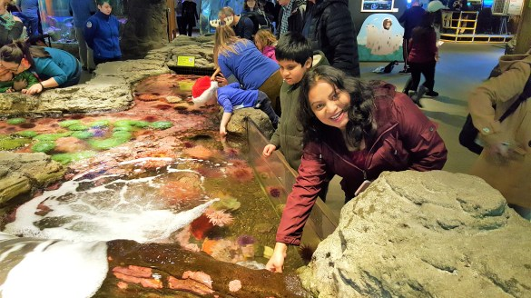 Touching Sea Life in Tide Pool at Seattle Aquarium Must Visit  Attractions in Seattle Washington