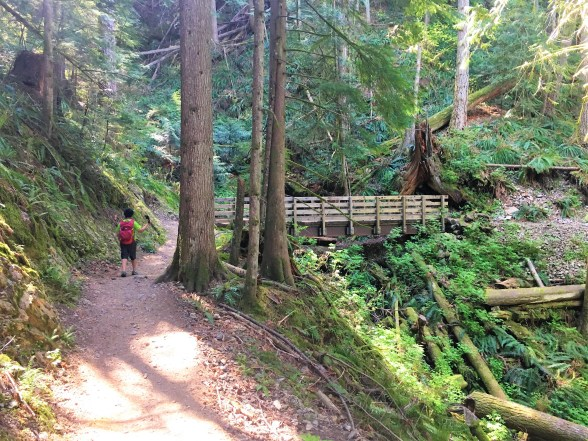 Wooden Bridge at Mailbox Peak Newtrail