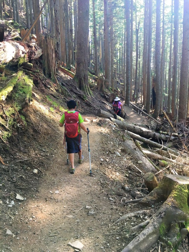 Dense woods at Mailbox Peak trail