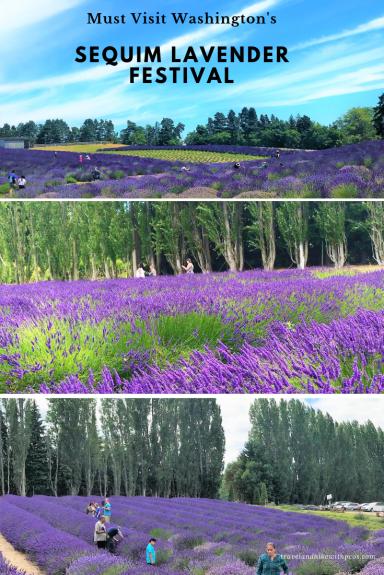 Sequim Lavender Farms Washington USA