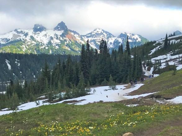 Wild Flowers bloom at Paradise Mount Rainier