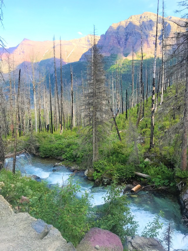 Blue waters of stream flowing next to Baring Falls trail, Glacier National Park.Hike To Baring Falls Glacier National Park