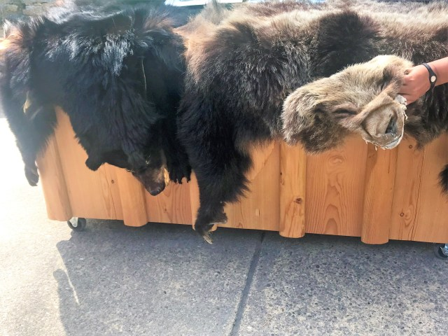 Black Bear and Grizzly Bear Skin Exhibit at Apgar Visitor Center Things to do at Glacier National Park