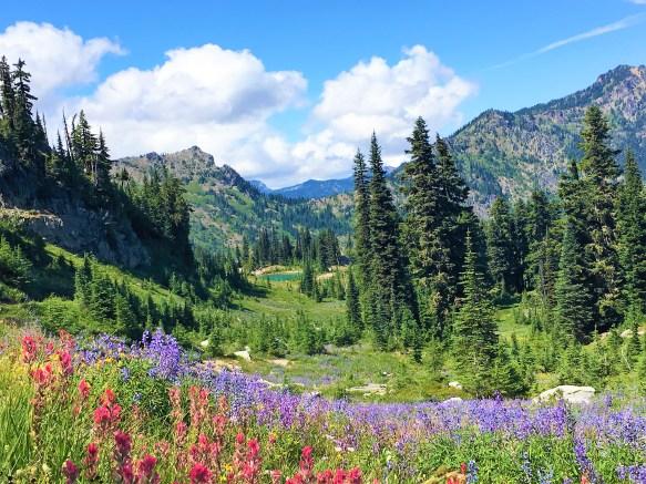 Colorful Wildflowers at Naches Peak Loop Trail Mount Rainier National Park