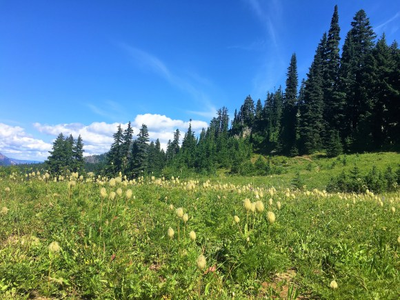Wildflowers at Pacific Crest trail at Chinook Pass Mount Rainier