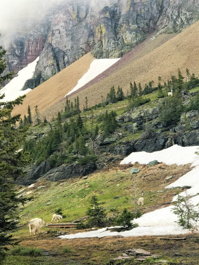 Hiking the Hidden Lake Trail, Glacier National Park