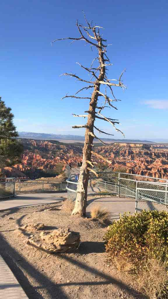 Paved Trail Leading towards the Bryce Point Viewing Deck. Things To Do In Bryce Canyon National Park.