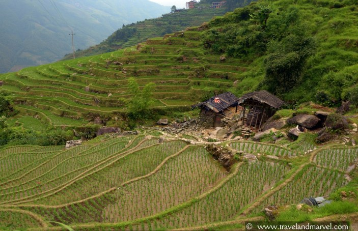Guilin Rice Terraces Longsheng
