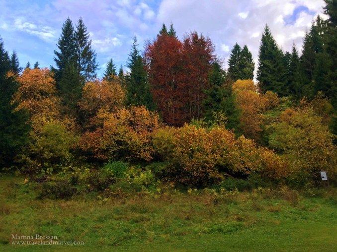 Escursione Asiago alle foreste del Barenthal