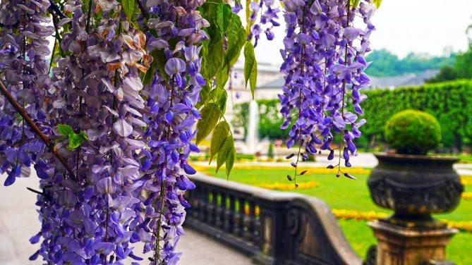Mirabell giardini Salisburgo