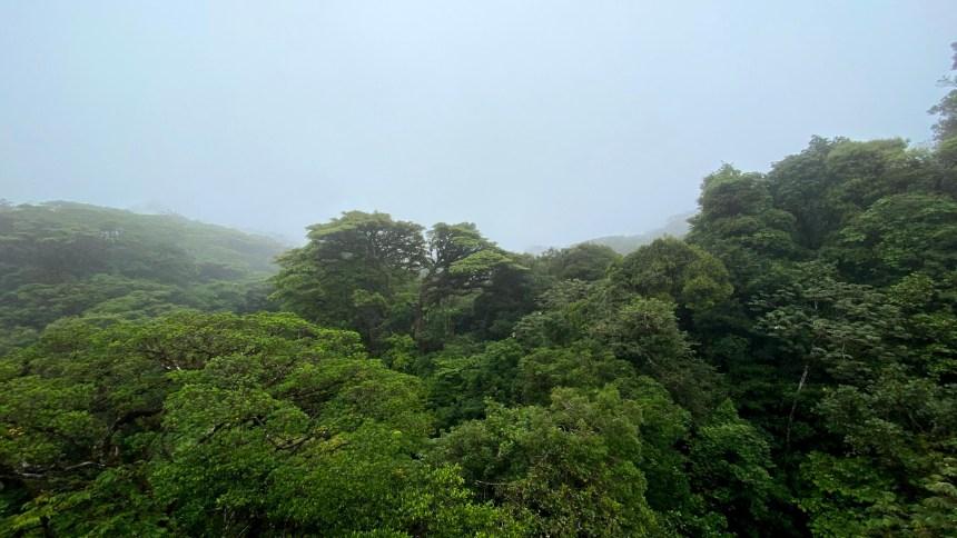 Monteverde 12