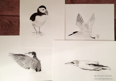 From the Silky Seabirds Collection - L to R: Puffin Power, The Savvy Sandwich Tern, The Cunning Comorant, Jet Fighter Gannet. © Carrie Sanderson Art
