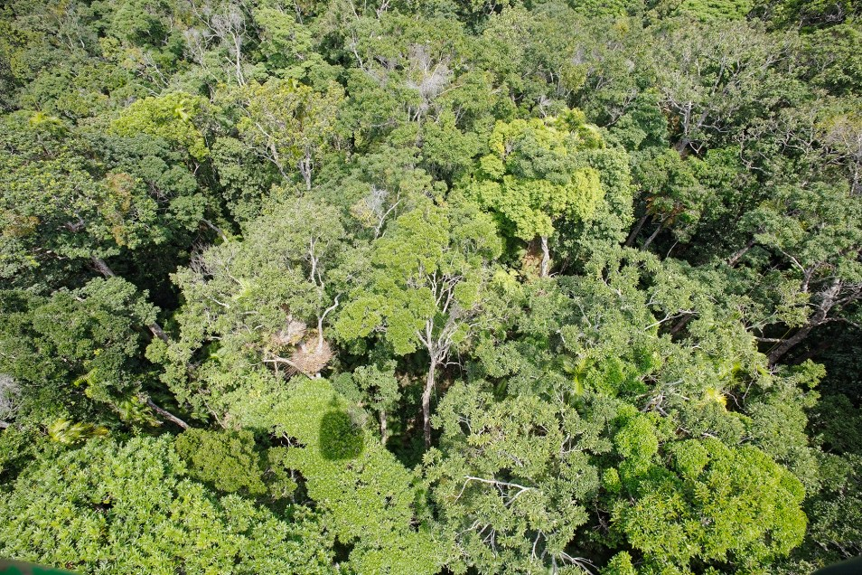 Skyrail Wet Tropics Rainforest