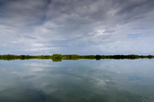 Belice con los niños - En el viaje en barco a Monkey River. Precioso paisaje!
