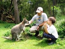 Hai noroc, Wallaby!