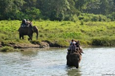 În jungla din Chitwan