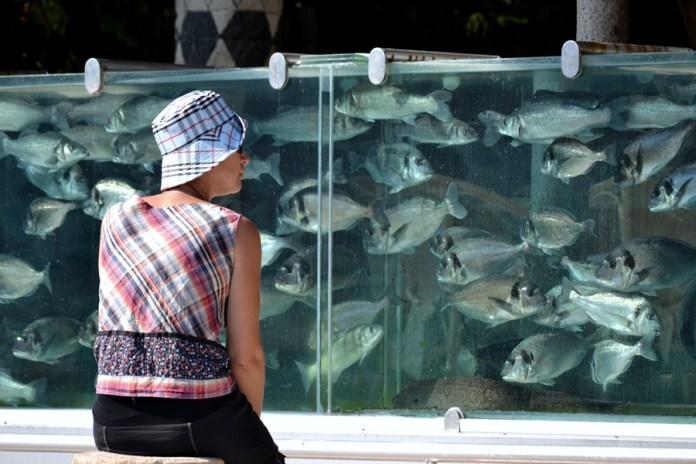 Gardul cu peşti din Çeşme