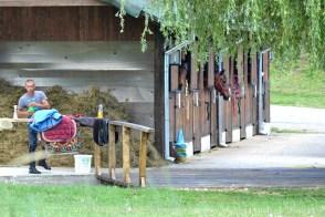 Caii de la conac sunt foarte bine îngrijiți