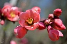 Primăvara la Golești