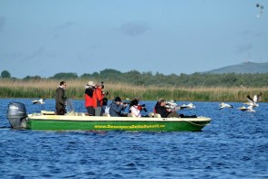 Safari în Deltă sau cum se urmăresc pelicanii
