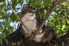 Un motan temerar, urcat de Tessa în copac
