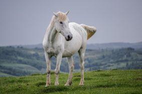 În zona Runcu sunt aproximativ 150 de cai care pasc în libertate totală