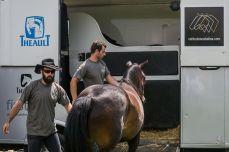 Vehiculos caballos