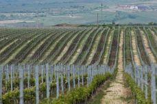 La vinării - Budureasca