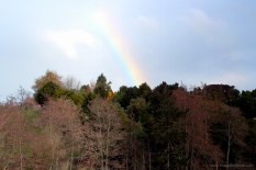 And then I saw rainbow (again!)