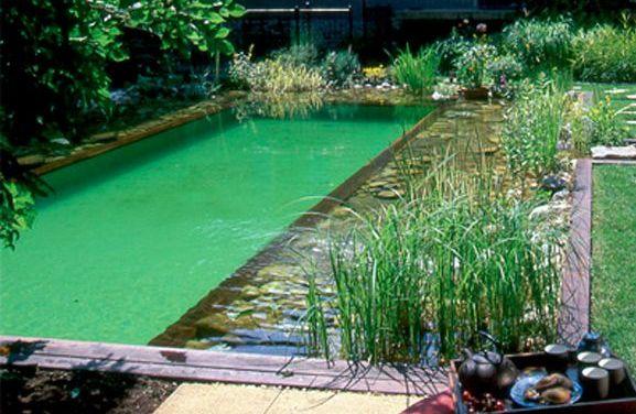 Les avantages et inconvénients des piscines naturelles