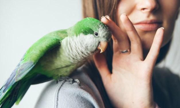 L'oiseau, un animal de compagnie pas comme les autres