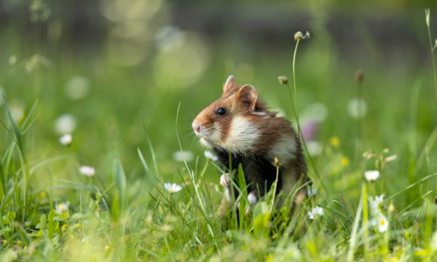 Installez judicieusement la cage du hamster