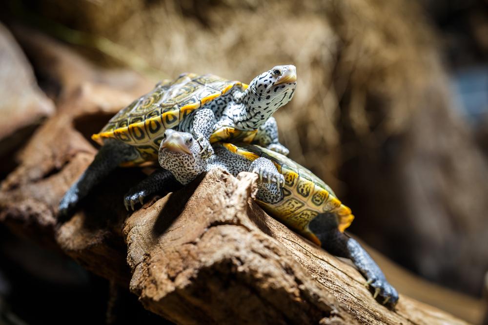 Le terrarium adapté pour votre tortue