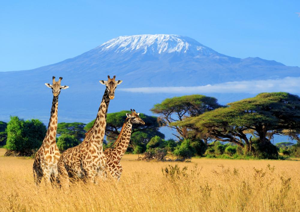 Direction le Kenya et ses parcs propices à un safari en solo