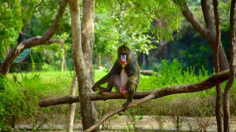 monkey nehru zoological park hyderabad
