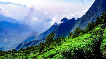 Tea gardens of Munnar