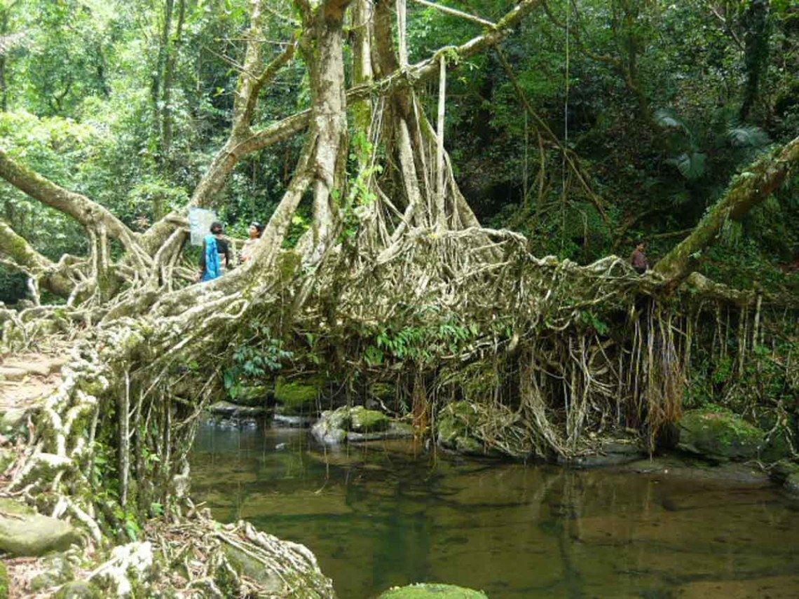 Hanging Root Bridges
